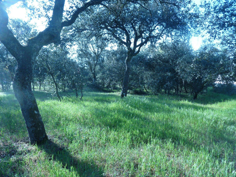 Terreno en venta en Área de la Sierra de San Vicente, Toledo 2 thumbnail