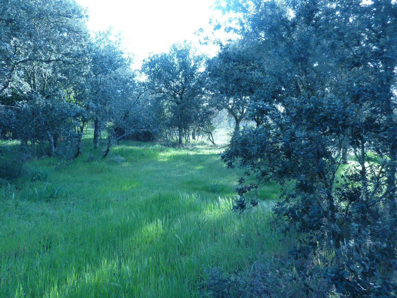 Terreno en venta en Área de la Sierra de San Vicente, Toledo 6 thumbnail