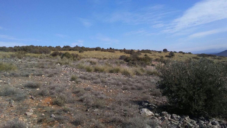 Terreno No Urbanizable En Venta Los Yebenes
