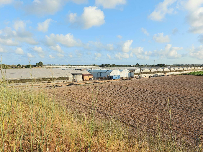 Terreny a Sant Boi de Llobregat