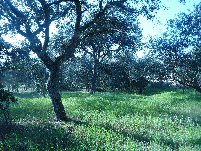 Terreno en venta en Área de la Sierra de San Vicente, Toledo 8 thumbnail
