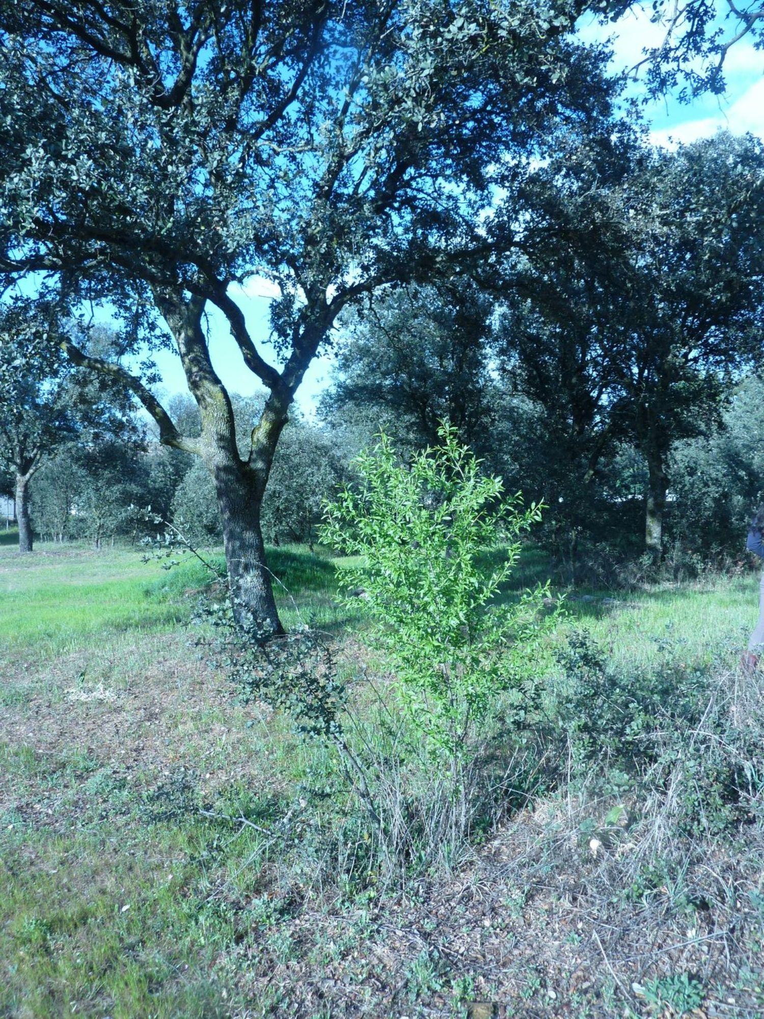 Terreno en venta en Área de la Sierra de San Vicente, Toledo 5 thumbnail