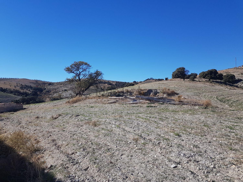 Imagen Terreno de terreno en  Era Alta s/n, Vélez Rubio