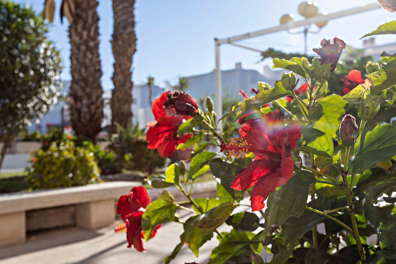 Imagen Jardín de ático en calle Magallanes, 190, Las Marinas, Vera