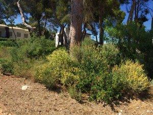 Land plots in Benissa, Alicante — idealista